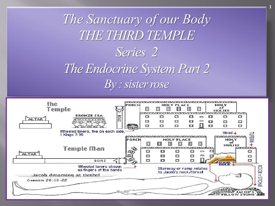 1 The Sanctuary of our Body THE THIRD TEMPLE Series 2 The Endocrine System Part 2 By : sister rose