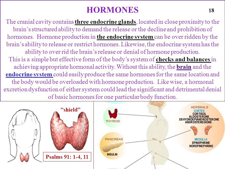 HORMONES The cranial cavity contains three endocrine glands, located in close proximity to the brains structured ability to demand the release or the decline and prohibition of hormones.