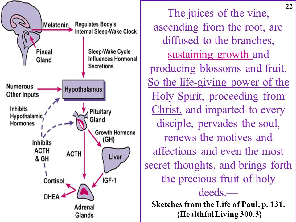The juices of the vine, ascending from the root, are diffused to the branches, sustaining growth and producing blossoms and fruit.