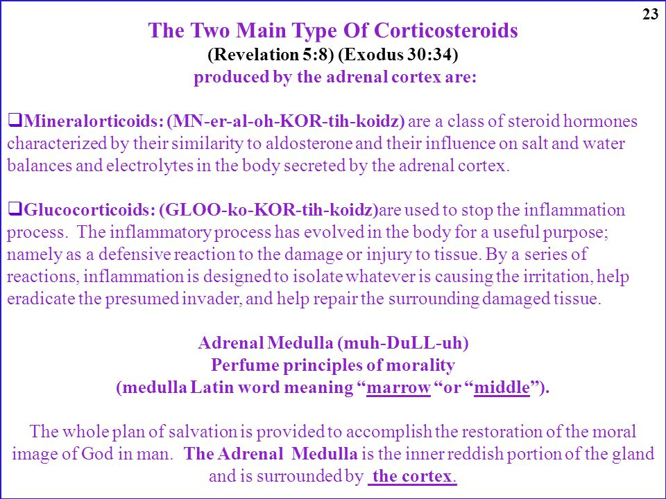 The Two Main Type Of Corticosteroids (Revelation 5:8) (Exodus 30:34) produced by the adrenal cortex are: Mineralorticoids: (MN-er-al-oh-KOR-tih-koidz) are a class of steroid hormones characterized by their similarity to aldosterone and their influence on salt and water balances and electrolytes in the body secreted by the adrenal cortex.
