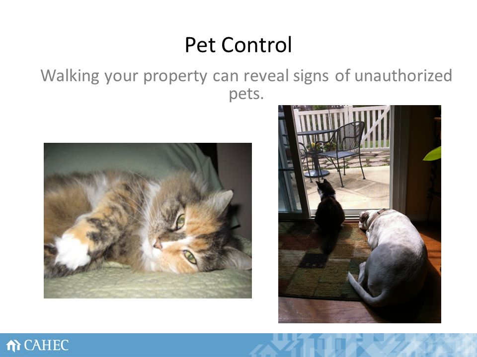 Pet Control 27 Walking your property can reveal signs of unauthorized pets.