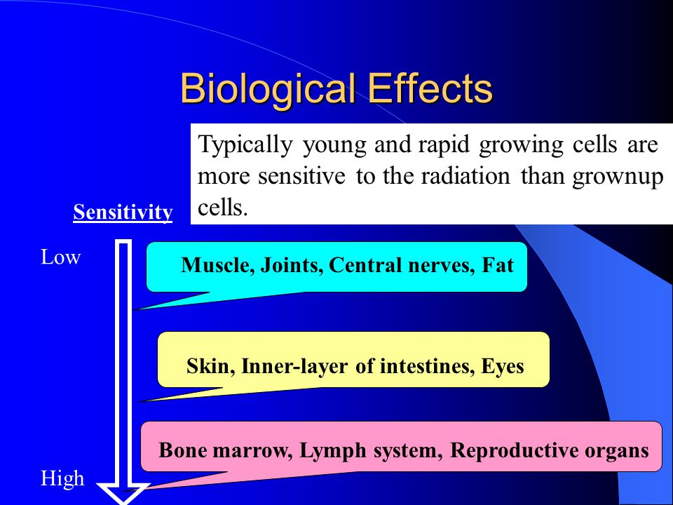 Biological Effects Sensitivity Low High Muscle, Joints, Central nerves, Fat Skin, Inner-layer of intestines, Eyes Bone marrow, Lymph system, Reproduct
