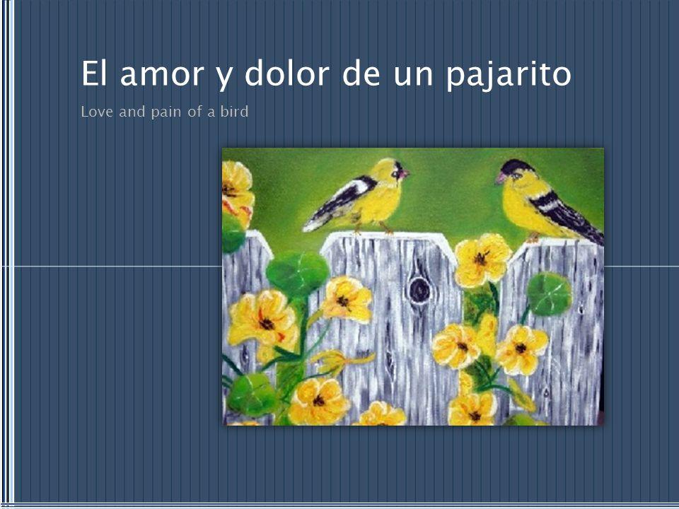 El amor y dolor de un pajarito Love and pain of a bird