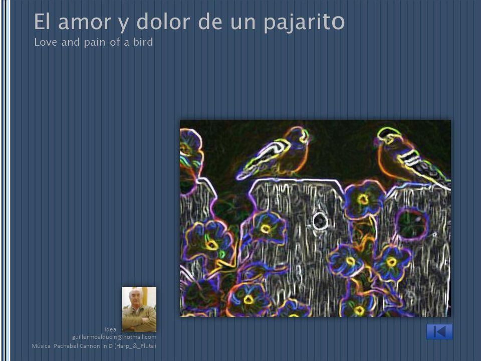Idea Love and pain of a bird El amor y dolor de un pajari to Música Pachabel Cannon In D (Harp_&_Flute) guillermoalducin@hotmail.com