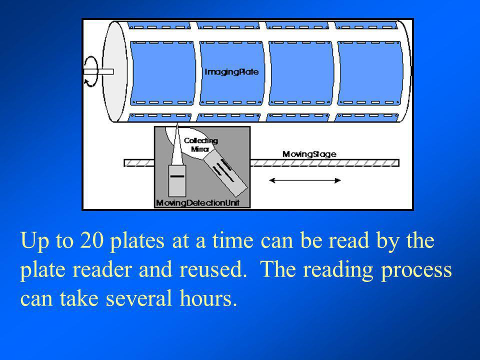 Up to 20 plates at a time can be read by the plate reader and reused. The reading process can take several hours.