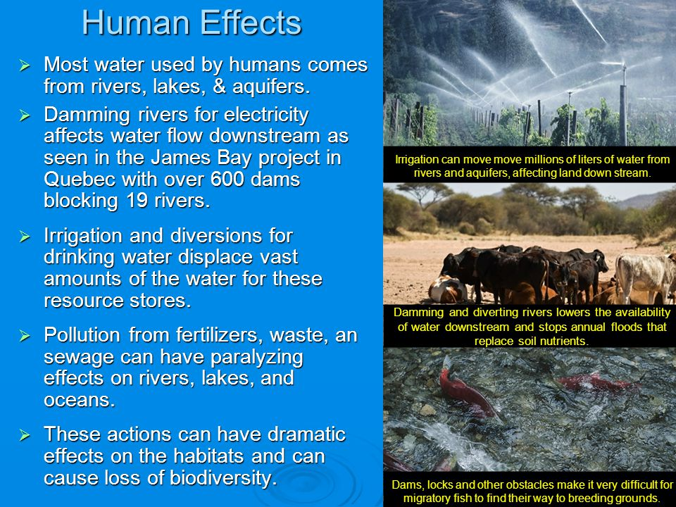 Human Effects Most water used by humans comes from rivers, lakes, & aquifers. Most water used by humans comes from rivers, lakes, & aquifers. Damming