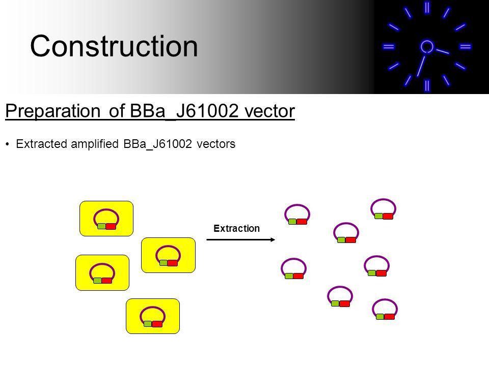 Preparation of BBa_J61002 vector Extracted amplified BBa_J61002 vectors Extraction Construction