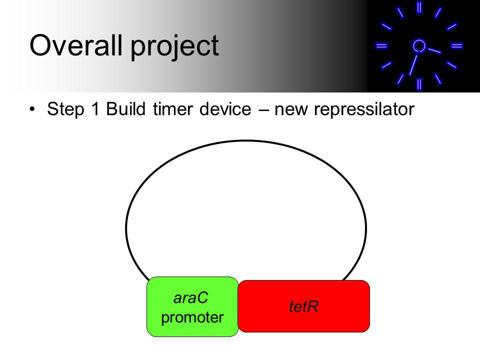Overall project Step 1 Build timer device – new repressilator araC promoter tetR