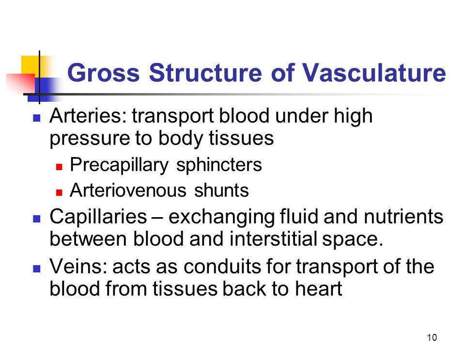 10 Gross Structure of Vasculature Arteries: transport blood under high pressure to body tissues Precapillary sphincters Arteriovenous shunts Capillari