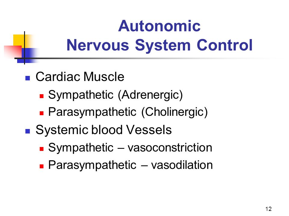 12 Autonomic Nervous System Control Cardiac Muscle Sympathetic (Adrenergic) Parasympathetic (Cholinergic) Systemic blood Vessels Sympathetic – vasocon