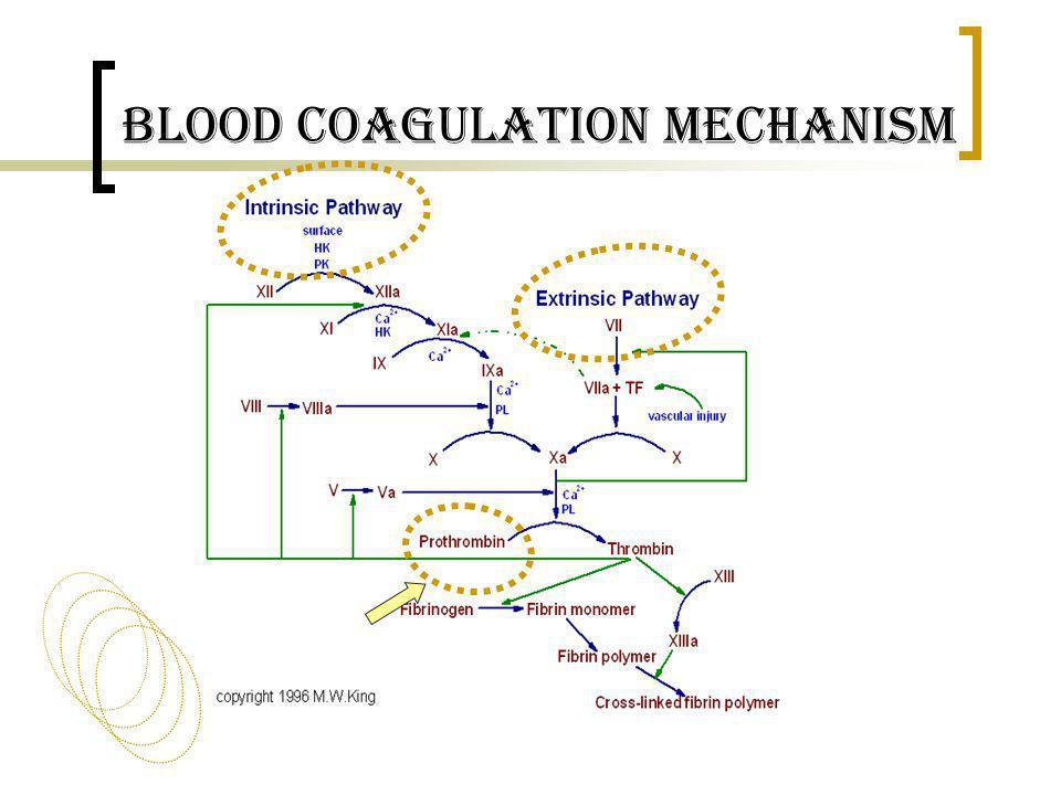 Blood Coagulation Mechanism