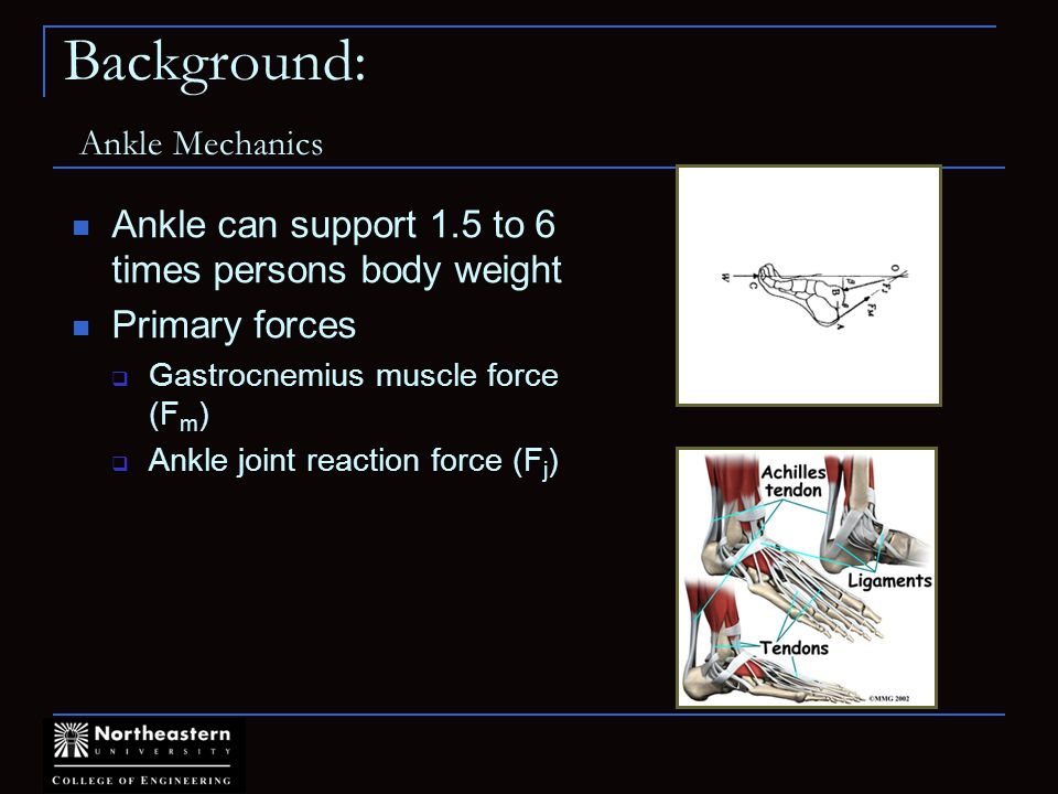 Background: Ankle Mechanics Ankle can support 1.5 to 6 times persons body weight Primary forces Gastrocnemius muscle force (F m ) Ankle joint reaction force (F j )
