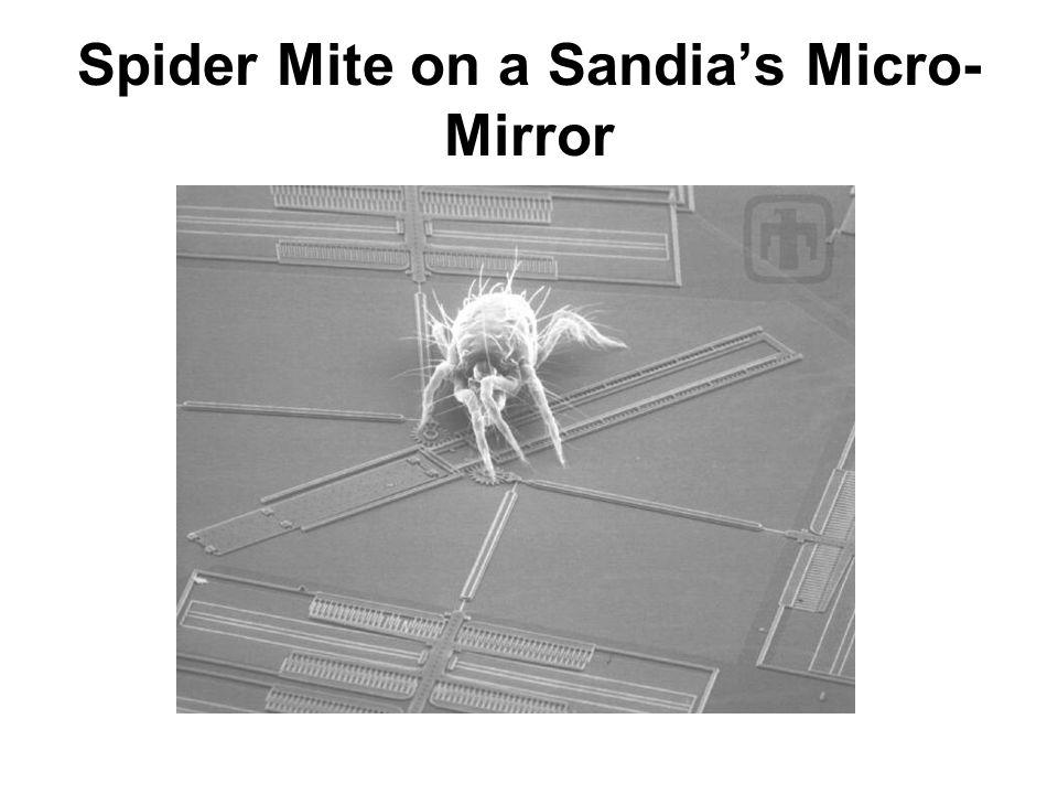 Spider Mite on a Sandias Micro- Mirror