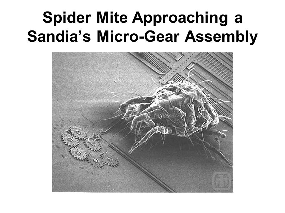Spider Mite Approaching a Sandias Micro-Gear Assembly
