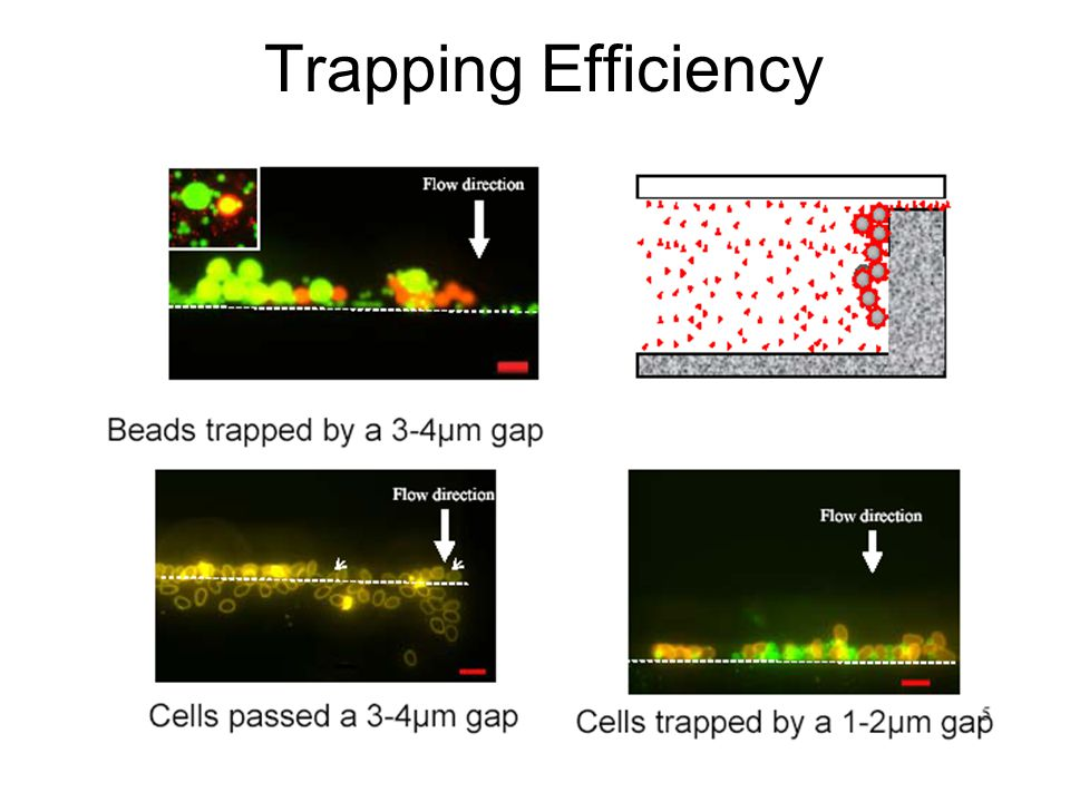 Trapping Efficiency