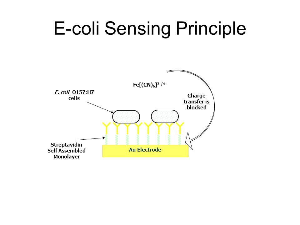 E-coli Sensing Principle Au Electrode E. coli O157:H7 cells Fe[(CN) 6 ] 3-/4- Charge transfer is blocked Streptavidin Self Assembled Monolayer