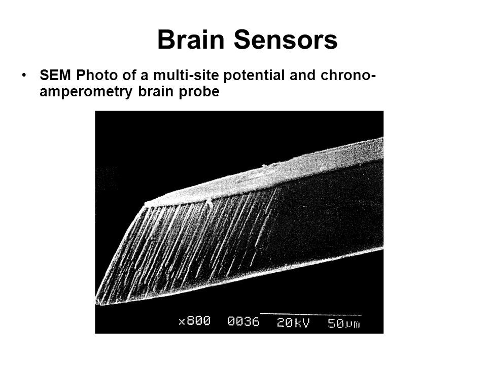 SEM Photo of a multi-site potential and chrono- amperometry brain probe Brain Sensors