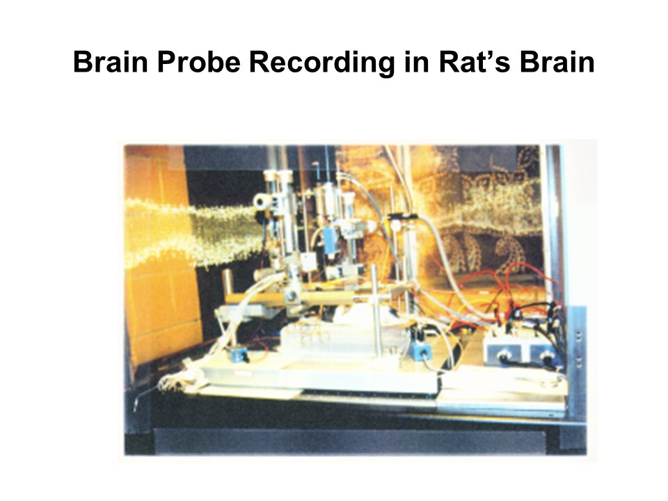 Brain Probe Recording in Rats Brain