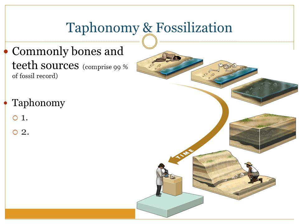 Taphonomy & Fossilization Commonly bones and teeth sources (comprise 99 % of fossil record) Taphonomy 1.