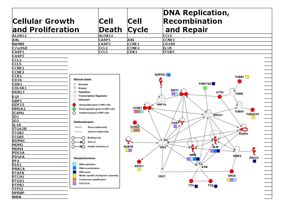 Cellular Growth and Proliferation Cell Death Cell Cycle DNA Replication, Recombination and Repair ALOX12 CCL5 AXLCASP1AXLCCNE1 BAMBICASP3CCNE1CD180 C7orf68CCL2CCNE2IL1B CASP1CCL5CDK1ITGB3 CASP3CCR1DDX17MDM2 CCL2CDK1EGFORC6 CCL5CTTNGDF15PDE5A CCNE1EGFH19PDGFA CCNE2GDF15HMGA2TFPI2 CCR1GIMAP5ID1VPRBP CD36HMGA2ID2WRN CDK1ICAM1IL1B COL4A1ID1ITGB3 DDX17IL1BKLHL2 EGFITGB3KNTC1 GBP1ITGB5MDM2 GDF15LGALS8MDM4 HMGA2MDM2ORC6 ICAM1MDM4PDK3 ID1NFIL3PRKCA ID2PDGFAPTAFR IL1BPF4RPS6KA2 ITGA2BPPBPVPRBP ITGB3PRKCAWRN ITGB5PTAFR KDM4C MDM2 MDM4 PDE5A PDGFA PF4 PLD1 PRKCA PTAFR PTCH1 PTGS1 PTPRJ TFPI2 VPRBP WRN