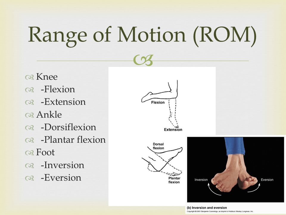 Knee -Flexion -Extension Ankle -Dorsiflexion -Plantar flexion Foot -Inversion -Eversion Range of Motion (ROM)