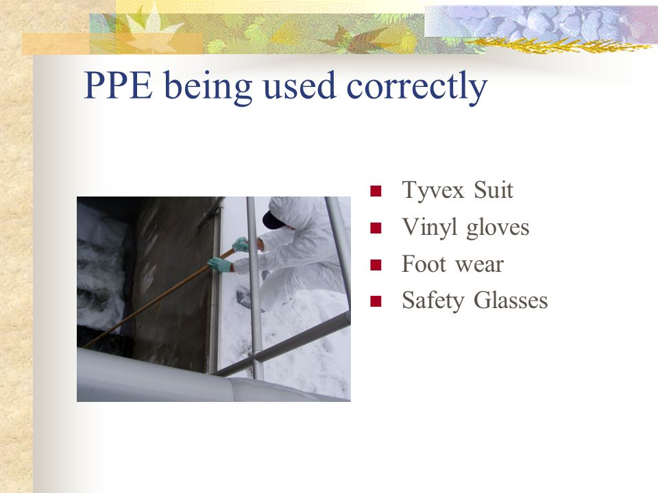 PPE being used correctly Tyvex Suit Vinyl gloves Foot wear Safety Glasses