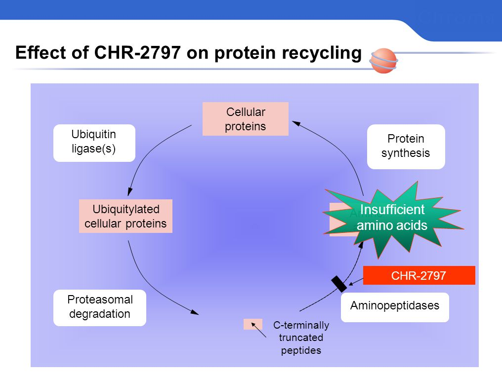 Effect of CHR-2797 on protein recycling Cellular proteins Ubiquitylated cellular proteins Proteasomal degradation Ubiquitin ligase(s) Aminopeptidases Amino acids C-terminally truncated peptides Protein synthesis CHR-2797 Insufficient amino acids