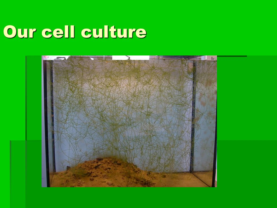 Our cell culture