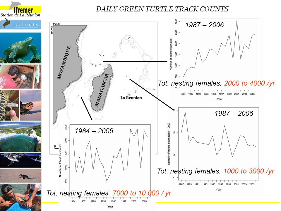 DAILY GREEN TURTLE TRACK COUNTS 1987 – 2006 Tot. nesting females: 2000 to 4000 /yr 1987 – 2006 Tot.