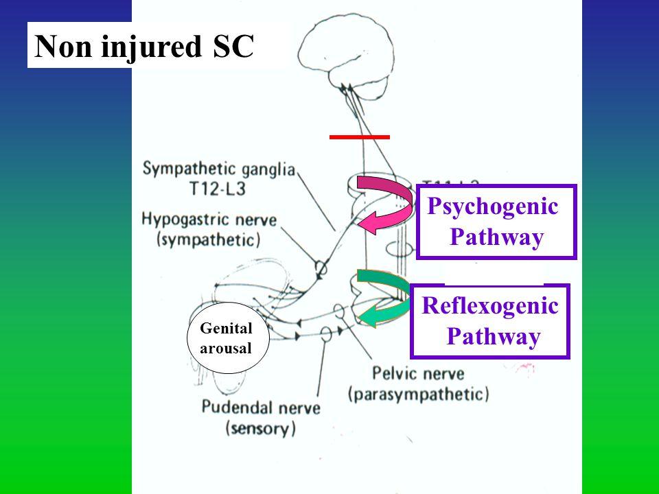 Psychogenic Pathway Reflexogenic Pathway Genital arousal Non injured SC