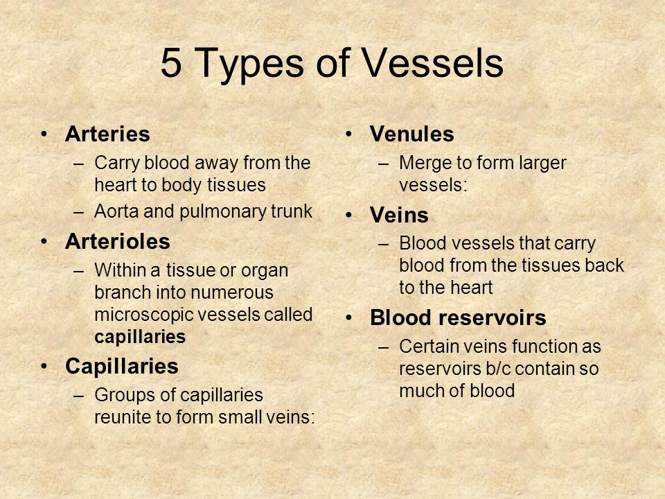 5 Types of Vessels Arteries –Carry blood away from the heart to body tissues –Aorta and pulmonary trunk Arterioles –Within a tissue or organ branch into numerous microscopic vessels called capillaries Capillaries –Groups of capillaries reunite to form small veins: Venules –Merge to form larger vessels: Veins –Blood vessels that carry blood from the tissues back to the heart Blood reservoirs –Certain veins function as reservoirs b/c contain so much of blood