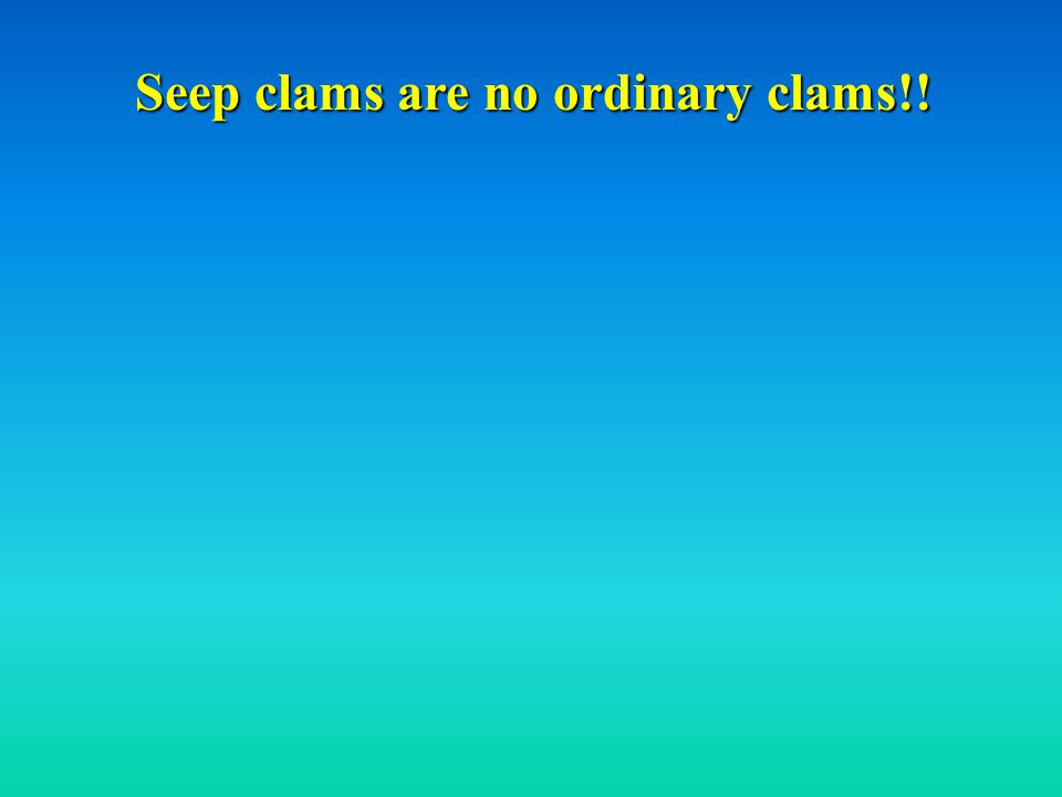 Seep clams are no ordinary clams!!