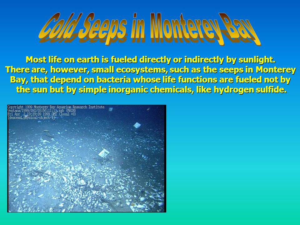 The dominant members of the animal community in these areas are often those living in association with bacterial symbionts, and encompass a wide range of phyla, including worms and clams.