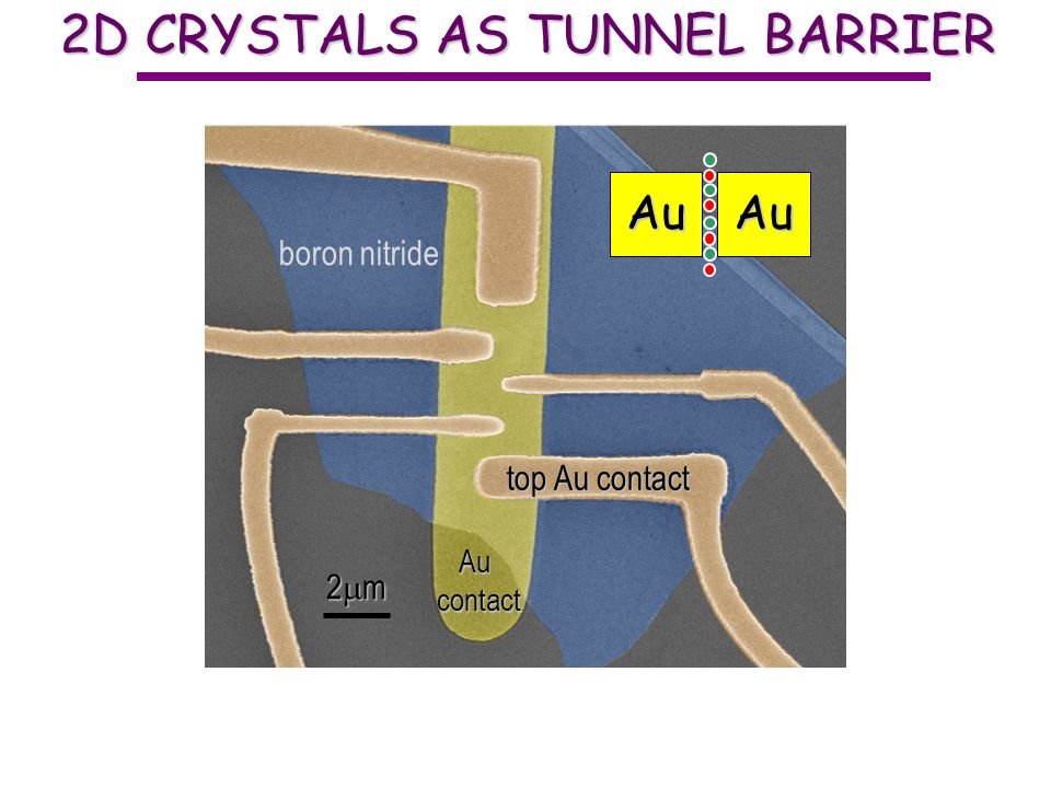 2D CRYSTALS AS TUNNEL BARRIER 1 layer BN can now find BN monolayers in an optical microscope top Au contact Aucontact boron nitride AuAu 2 m