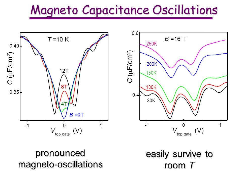 Magneto Capacitance Oscillations 250K 150K 100K 200K 01 0.4 0.6 B =16 T C ( F/cm 2 ) V top gate (V) 30K 12T 8T 4T B =0T T =10 K 01 0.35 0.40 C ( F/cm 2 ) V top gate (V) pronouncedmagneto-oscillations easily survive to room T