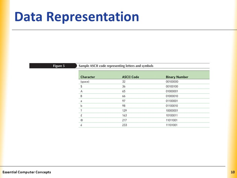 XP Data Representation Essential Computer Concepts10