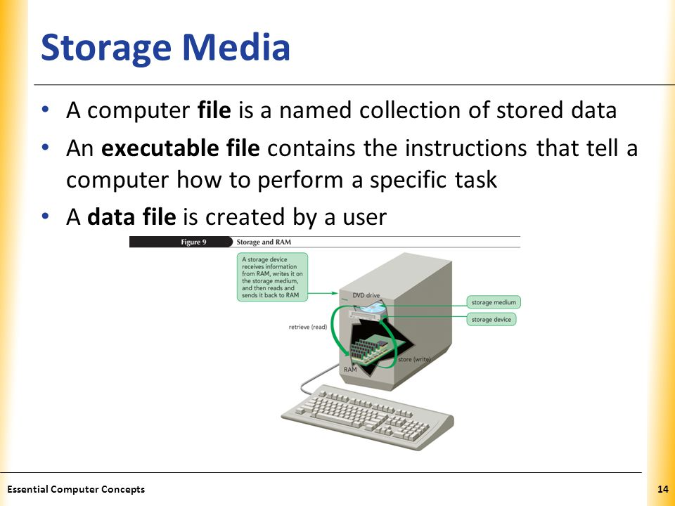 XP Storage Media A computer file is a named collection of stored data An executable file contains the instructions that tell a computer how to perform