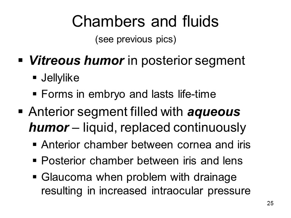 25 Chambers and fluids Vitreous humor in posterior segment Jellylike Forms in embryo and lasts life-time Anterior segment filled with aqueous humor –