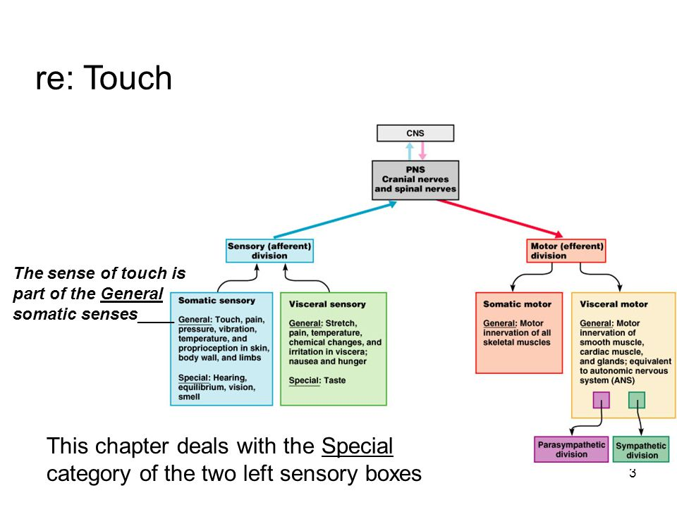 3 re: Touch The sense of touch is part of the General somatic senses____ This chapter deals with the Special category of the two left sensory boxes
