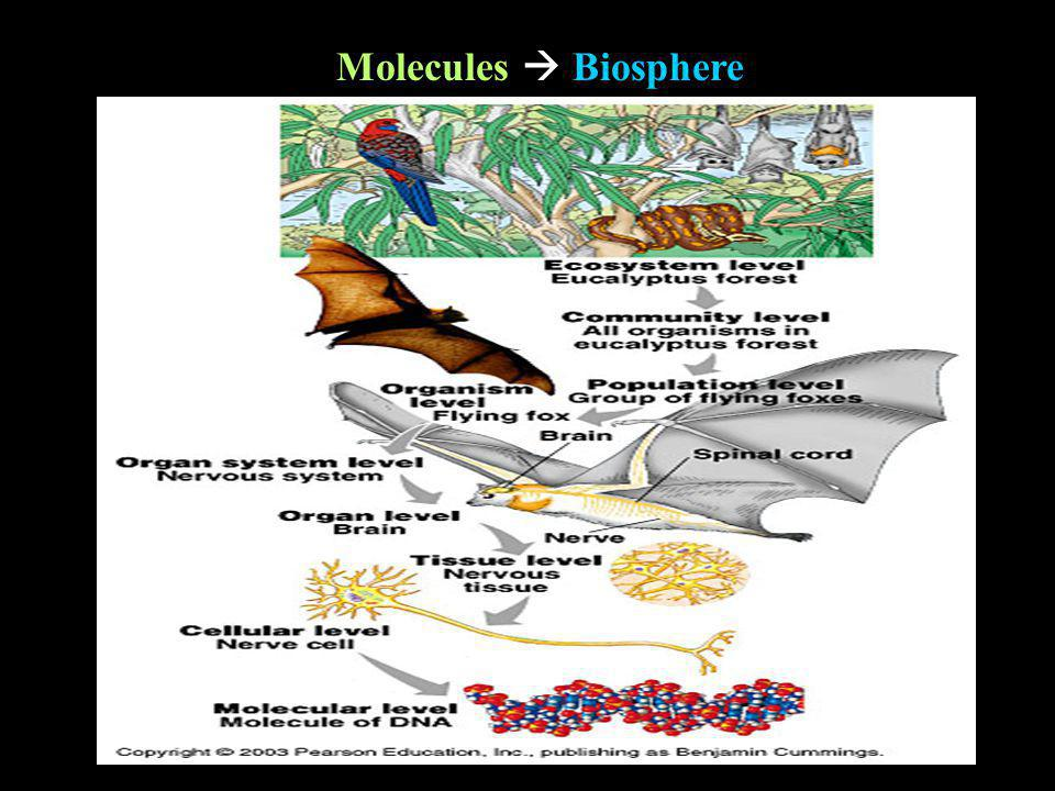 Molecules Biosphere