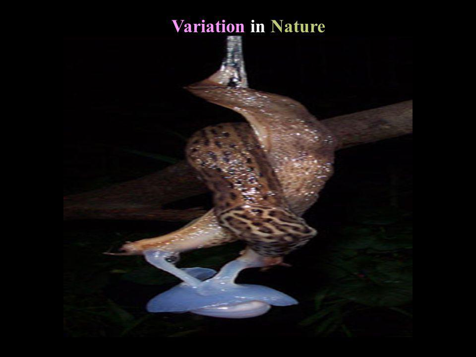 Variation in Nature