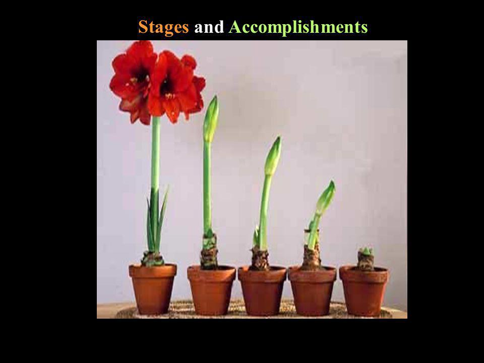 Stages and Accomplishments