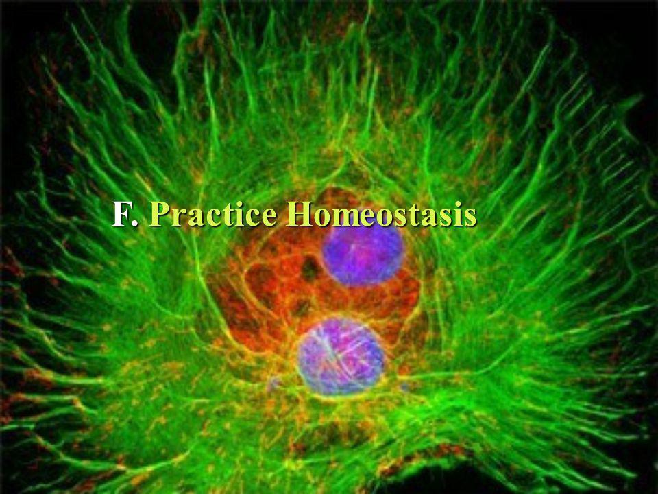 F. Practice Homeostasis