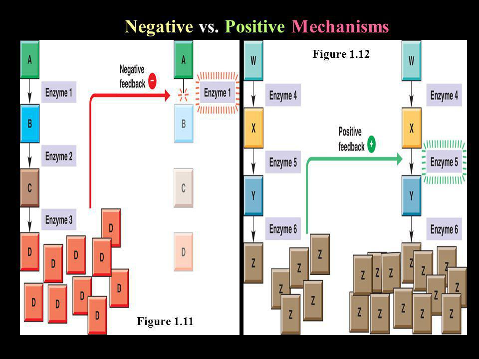 Negative vs. Positive Mechanisms Figure 1.11 Figure 1.12