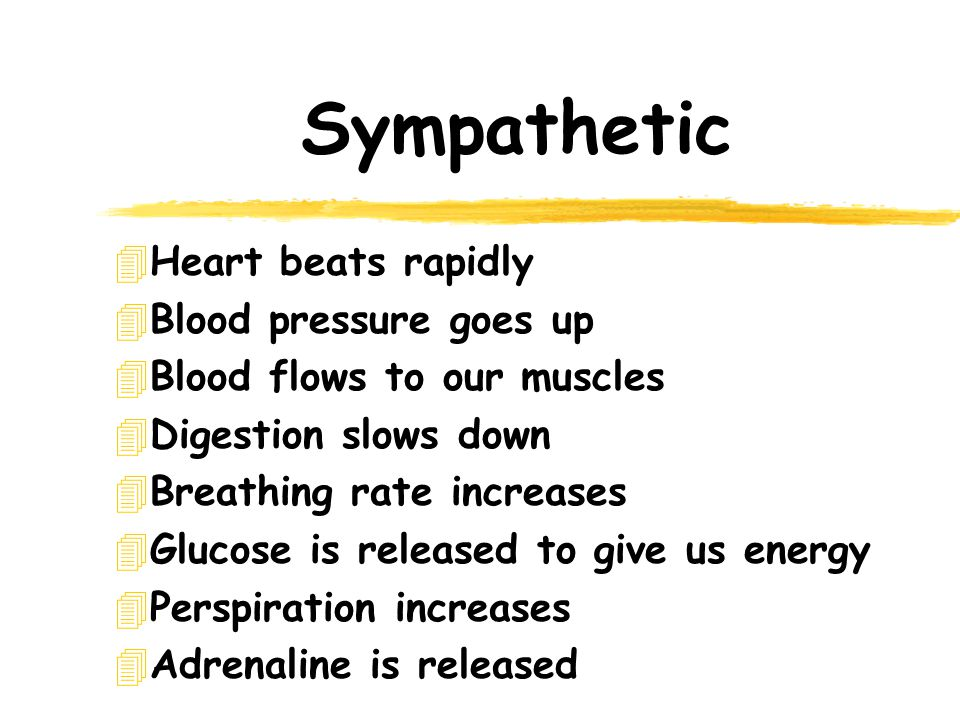 Sympathetic 4Heart beats rapidly 4Blood pressure goes up 4Blood flows to our muscles 4Digestion slows down 4Breathing rate increases 4Glucose is released to give us energy 4Perspiration increases 4Adrenaline is released