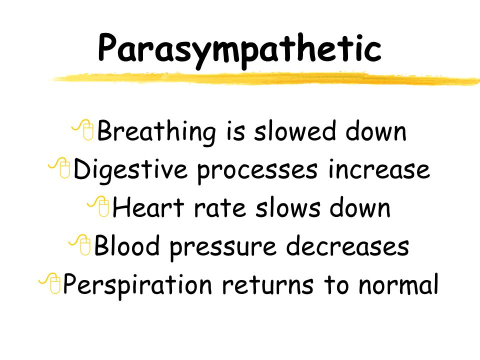 Parasympathetic 8Breathing is slowed down 8Digestive processes increase 8Heart rate slows down 8Blood pressure decreases 8Perspiration returns to normal