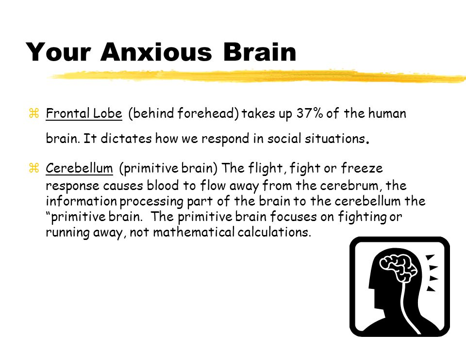 Your Anxious Brain zFrontal Lobe (behind forehead) takes up 37% of the human brain.