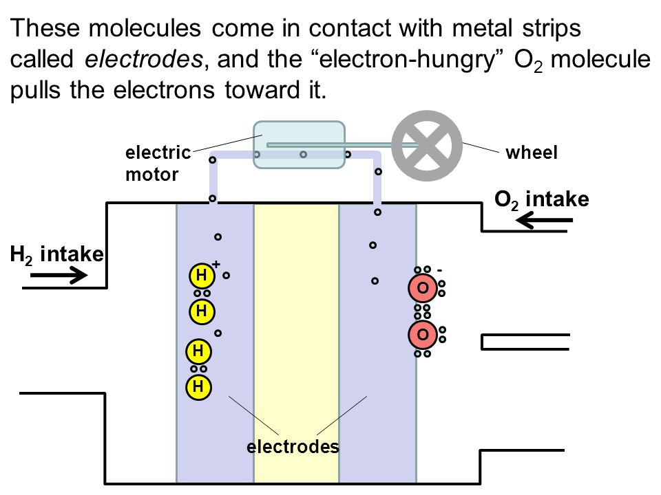 These molecules come in contact with metal strips called electrodes, and the electron-hungry O 2 molecule pulls the electrons toward it. H H OO H H +