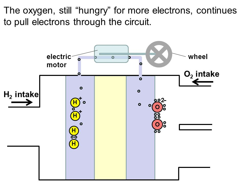The oxygen, still hungry for more electrons, continues to pull electrons through the circuit. H H OO H H + + -2- H 2 intake O 2 intake electric motor