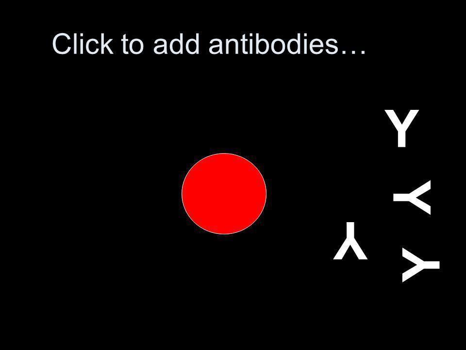 Click to add antibodies… Y Y Y Y